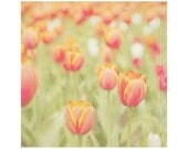 Floral photography  - Flower art - Summer - Fine art photography print - Floral - tulips - 5x5 - red - green