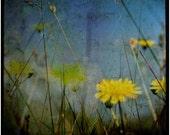 Midday Meadow III - Signed Original Fine Art Photograph
