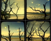 Landscape Photography Set Summer Solstice Driftwood Trees Beach Photos Surreal Nature Prints 5x5 TtV Seashore Ocean Coastal Cottage Decor