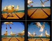 Bird Photo Set Seagull Photo Prints TtV 5x5 Whimsical Wildlife Animal Nature Photography Blue Summer Beach Home Wall Decor Art Collection