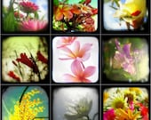 Flower Photo Set Botanical Flower Photograpy, Summer Garden, Spring Decor Prints TtV Floral Photographs 4x4