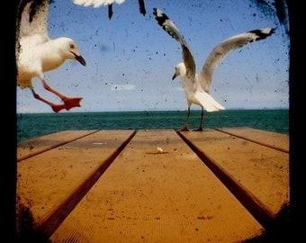 TTV Bird Photo -  A Flock of Seagulls, Summer Beach Scenes, Vintage Style Nature Photography, Happy Holidays, 5x5 Coastal Wall Art Print