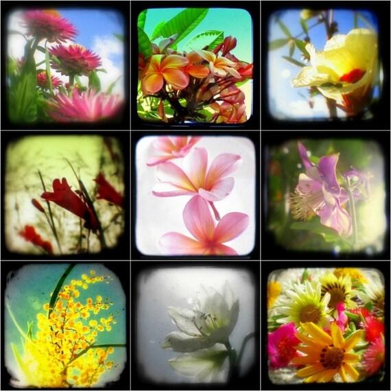 Flower Photo Set Botanical Flower Photograpy, Summer Garden, Spring Decor Prints TtV Floral Photographs 4x4