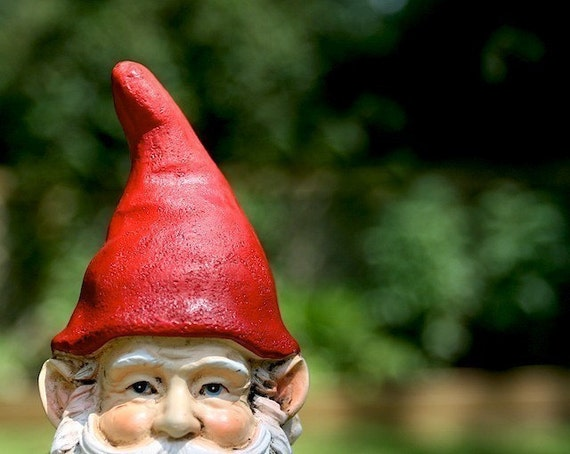 Sneaky Gnome - Photograph - Various Sizes