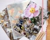 Outdoor flowers postcard set of 3
