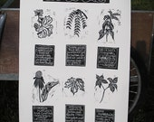 Medicinal Plants of Kentucky hand-printed poster