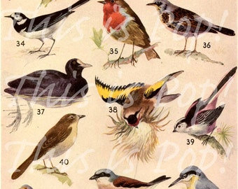 This is Pop - Vintage Birds No.1, Digital Collage Sheet, for scrapbooks, collage, art, cards etc