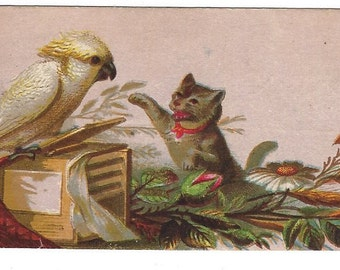 Antique Paper Picture Card Parrot with Kitty