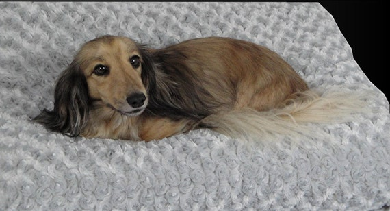 Dog Bed - Cat Bed -Silver Cloud - Plush Faux Fur Rosettes Pillow - Includes Embroidered Personalization