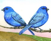 Indigo Buntings    SPECIAL set of 2 prints