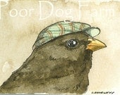 ACEO signed PRINT -Little Junco with hat -