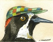 ACEO Signed PRINT - Acorn Woodpecker with hat