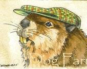 Beaver in a hat 8 x 10 print
