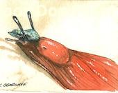 ACEO signed PRINT - Orange Slug with hat-
