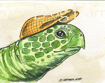 ACEO print - Sea Turtle in a hat