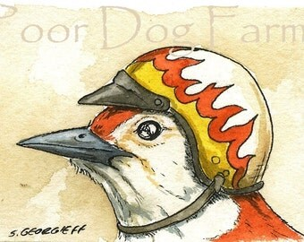 Woodpecker in biker helmet 5 x7 print