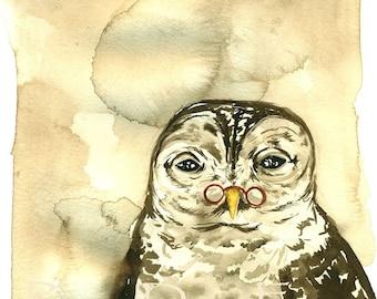 Old Owl  Wash