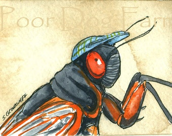ACEO signed PRINT -Periodical Cicada  in a hat