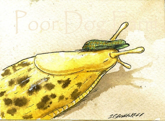 ACEo signed PRINT - Slug with hat-