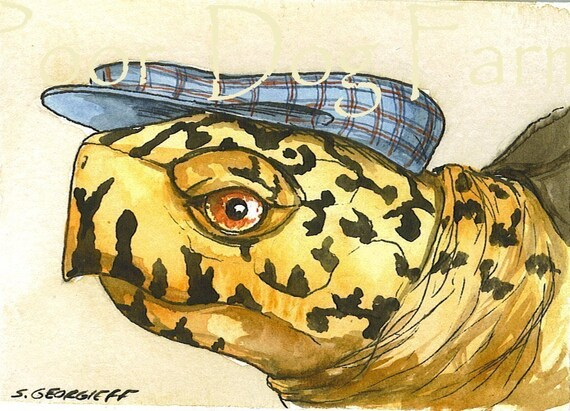 ACEO signed Print - Box turtle  in a hat
