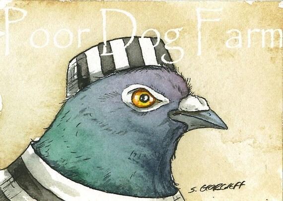Jailbird Pigeon no 3 - 5 x 7