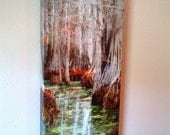 Beneath The Trees 10X20 CANVAS WRAP Fall Trees Swamp Lake Bayou Nature Shot Photo Water Red Tree Louisiana Bayous  102