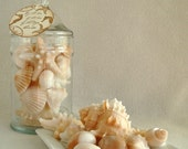 Soap - Apothecary Jar of Shells - Gift