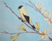 Archival Quality Print of Original Watercolor Painting, Yellow, Goldfinch, Forsythia Flower, Spring