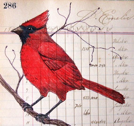 Cardinal - Art Print - Primitive Folk Art - Original Colored Pencil Pen & Ink - Gift for Bird Lover - Wall Art - Gift for Teacher - Red Bird