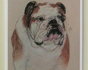 Big Boy Bulldog Dog Art Note Cards By Cori Solomon
