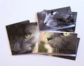 "CLOSING DOWN SALE use code ""dreamlike"" for 25% off - Cat Blank Greeting Cards Set of 6 (2 of Each Design) Pet Photography"