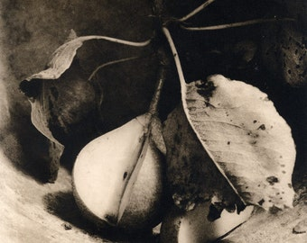 Pear still life black and white fine art photography