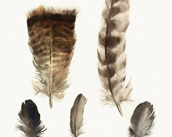 "feathers painting, watercolor, art, wall, decor, earth tones, ""Found Feathers no. 2 "" Large Archival Print"