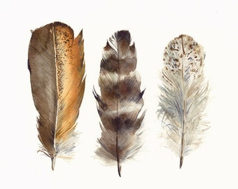 Chicken Feathers archival Art print of Original watercolor