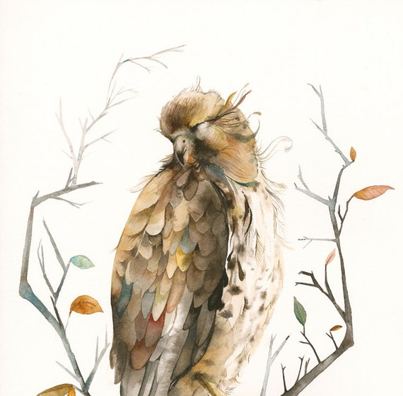 Red Tailed Hawk - 11  x 17 Archival print