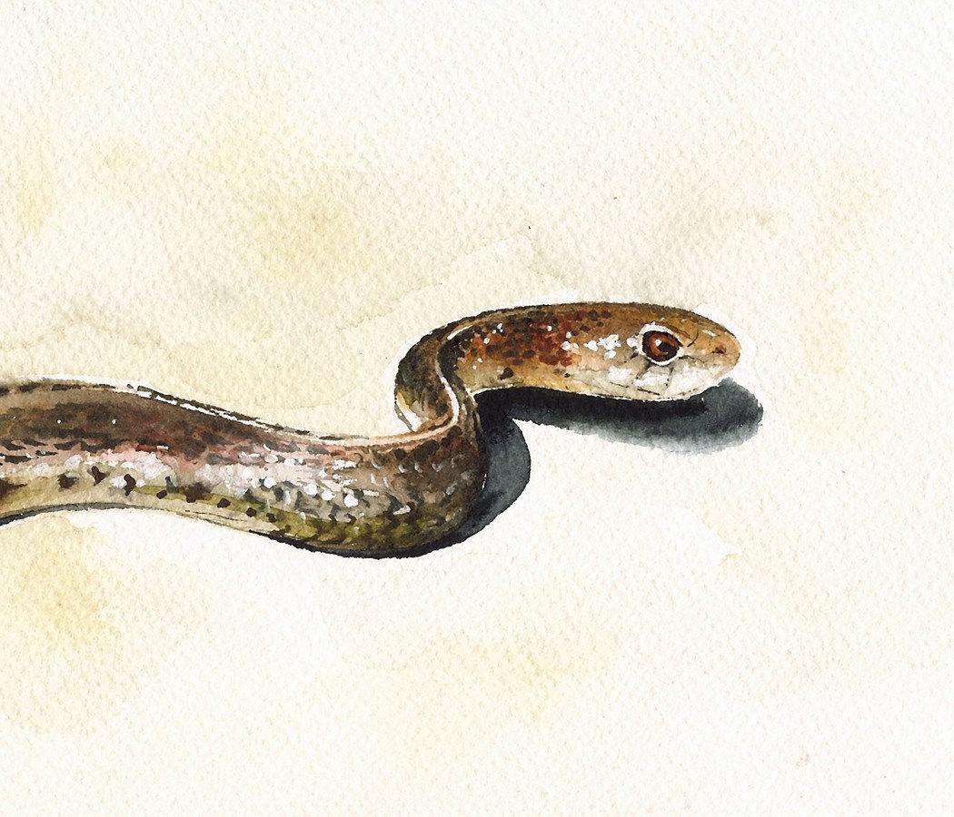 snake original
