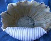 High Fired Shell Sculpture  104