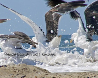 """Seagulls """"Splash""""-Matted and Ready to Frame-Original Photography of Seagulls on the beach"""