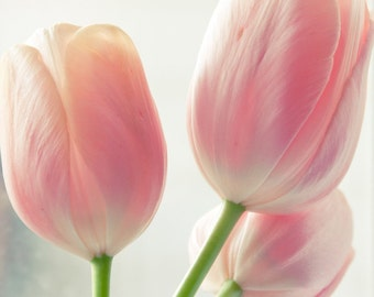 Dreamy Pink Tulips - Fine Art Photograph Prints Set of 3 - 8x10