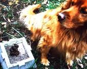 Dog Poop Photo Card Hellmark Greetings