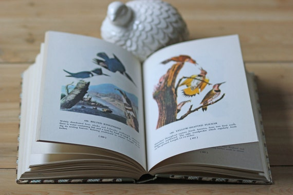 Birds of America book / illustrated / prints