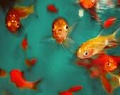 8x10 - Something Fishy
