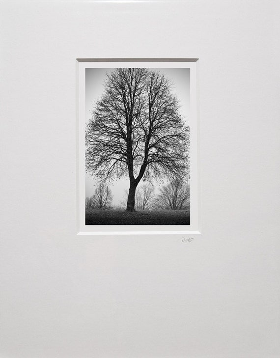 The Y Tree Print Ready to Frame in White Mat 11 x 14