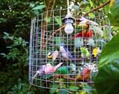 twitterpated birdcage chandelier