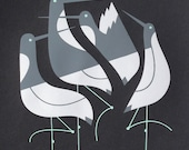 terns limited edition print