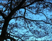Abstract Tree Photography Silhouetted branches photo Blue Ridge Mountain sky. Black Blue. Wall Art 5 x7  Metallic Paper In Stock