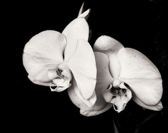 "Orchid photography Black & White flower photos ""Homage To Georgia O'Keefe"" Floral home decor striking wall art 5x7, 8x10, matted Print"