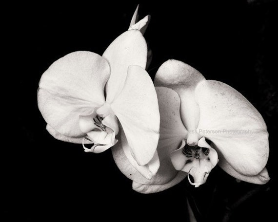 Items similar to Orchid photography Black & White flower ...