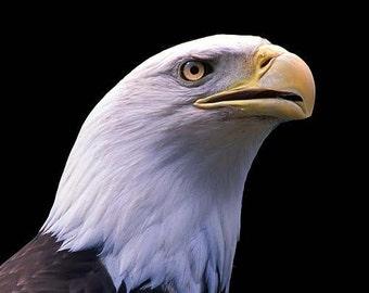 Proud - Bald Eagle Portrait - 5x7 Original Fine Art Photograph