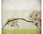Ben Anis (Nature Photography - Fine Art Print - Blossom Flowers - Branch - Country - Spring - paints - Pastel - Yellow Green)